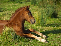 clinique v t rinaire avignon immobilit chez le cheval. Black Bedroom Furniture Sets. Home Design Ideas