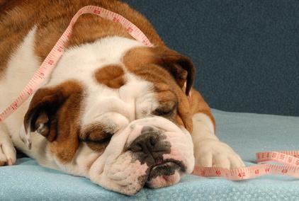 dog diet or health