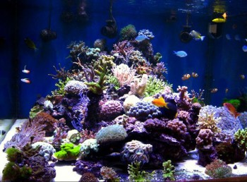 Aquarium_recifal1
